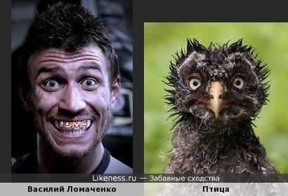 Василий Ломаченко и птица