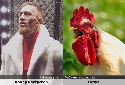 Конор Макгрегор и петух 2