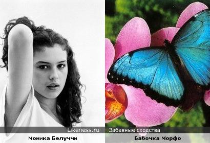 Моника Белуччи похожа на Морфо