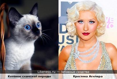 Кристина Агилера похожа на котёнка