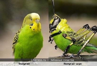 Попугай и попугай под чучелом жука
