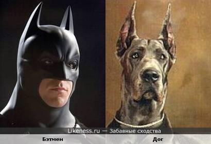 Бэтмен напоминает дога