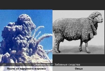 Пыль от ядерного взрыва похожа на овцу