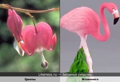 Цветы похожи на фламинго