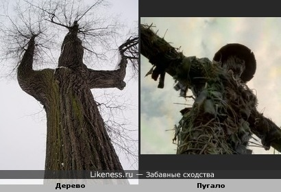 Дерево похоже на пугало