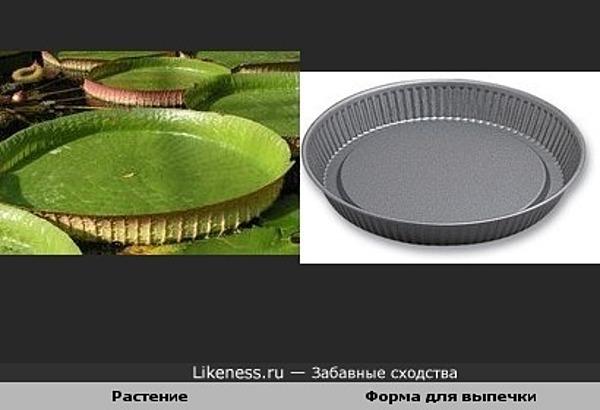 Растение похоже на форму для выпечки