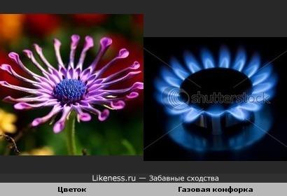 Цветок похож на газовую горелку