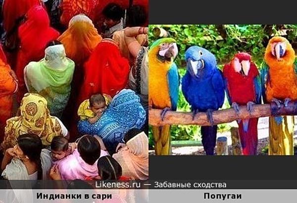 Индианки в сари похожи на цветных попугайчиков