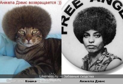Кошка похожа на Анжелу Дэвис