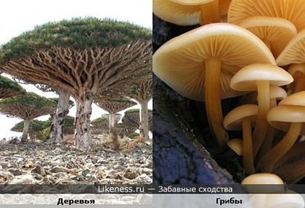 Деревья похожи на грибы