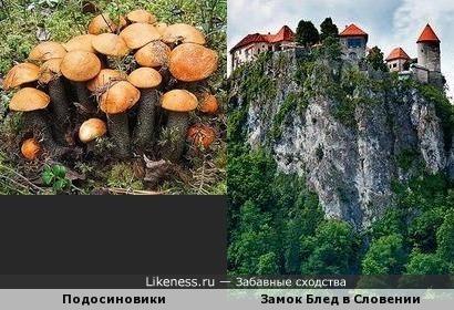 Замок Блед в Словении похож на подосиновики
