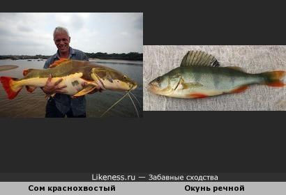 Рыба рыбе рознь, а похожи!