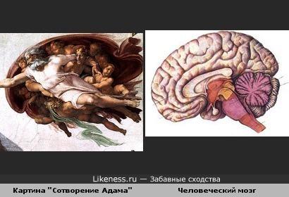 """Фрагмент картины """"Сотворение Адама"""