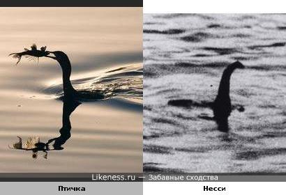 Птица похожа на Лох-Несское чудовище