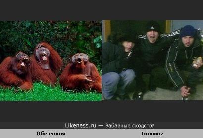 Обезьяны VS Гопники