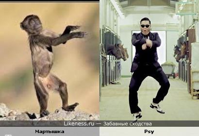 Мартышка танцует Gangnam style
