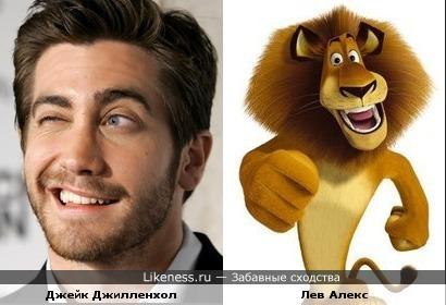 Джейк Джилленхол похож на льва Алекса