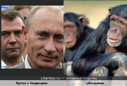 на фото Путин и Медведев напомнили обезьянок