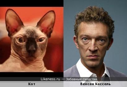 Кот напоминает Венсана Касселя