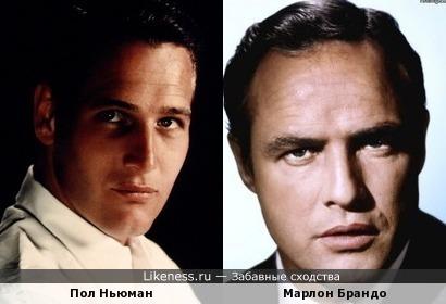 Пол Ньюман немного похож на Марлона Брандо