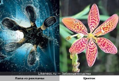 Реклама шин напоминает цветок