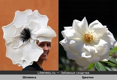 Шляпка похожа на цветок