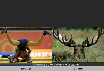 """Борцы в позе """"Оленя"""""""