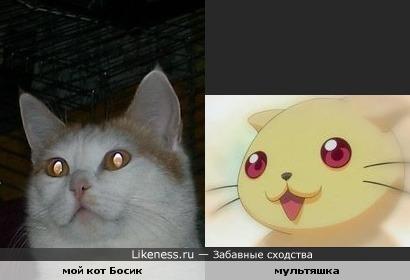Мой кот похож на мультяшку-2