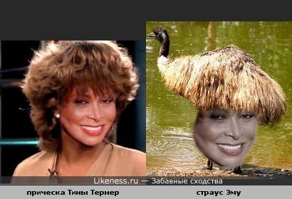 У Тины Тернер на голове страус Эму