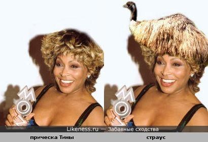 У Тины Тернер на голове страус Эму-2