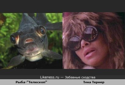 "Рыба-""Телескоп"" и Тина Тернер"
