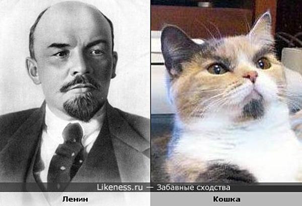 Кошка похожа на Ленина