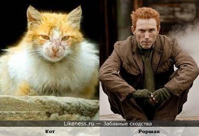 Помойный кот похож на Роршаха