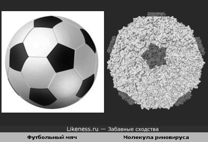Футбольный мяч похож на риновирус