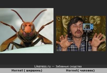 Hornet похож на Hornet :)