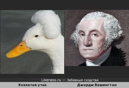 Утка похожа на президента Джорджа Вашингтона
