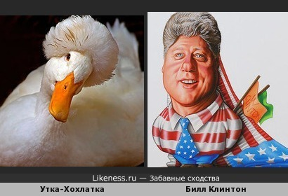 А эта утка похожа на Билла Клинтона