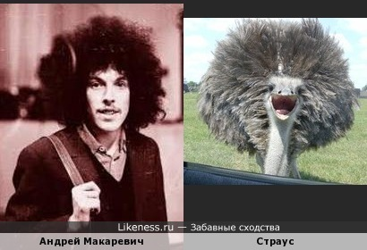Андрей Макаревич в молодости и страус .
