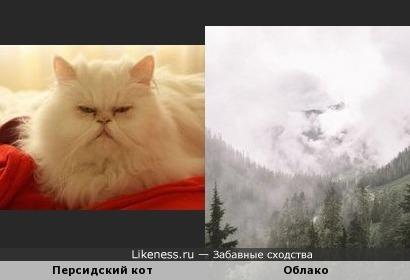 Персидский кот и облако