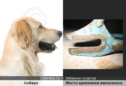 Дропаут велосипедного колеса в профиль похож на собаку