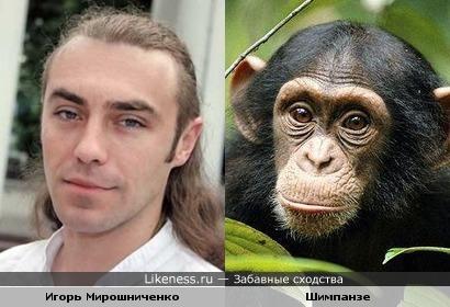 Игорь Мирошниченко похож на шимпанзе