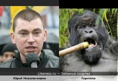 Юрий Михальчишин похож на гориллу