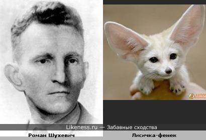 Роман Шухевич похож на лисичку-фенека