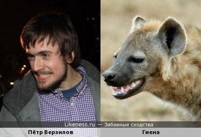 Пётр Верзилов напоминает гиену