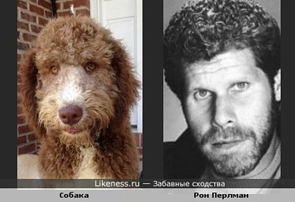Собака похожа на Рона Перлмана