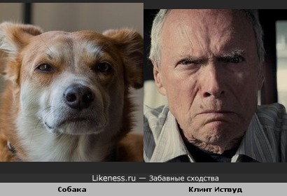 Собака похожа на Клинта Иствуда