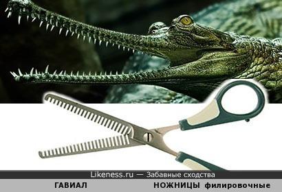 Челюсть крококодила как расческа или филировочные ножницы.