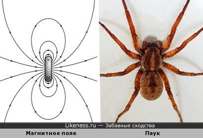 Модель диполя напомнила паука