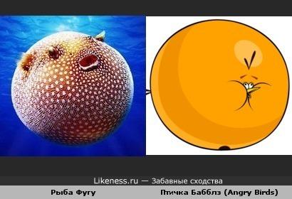 В море свой Angry Birds...