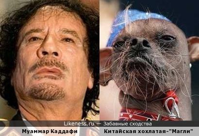 """Муаммар Каддафи и """"Магли""""."""
